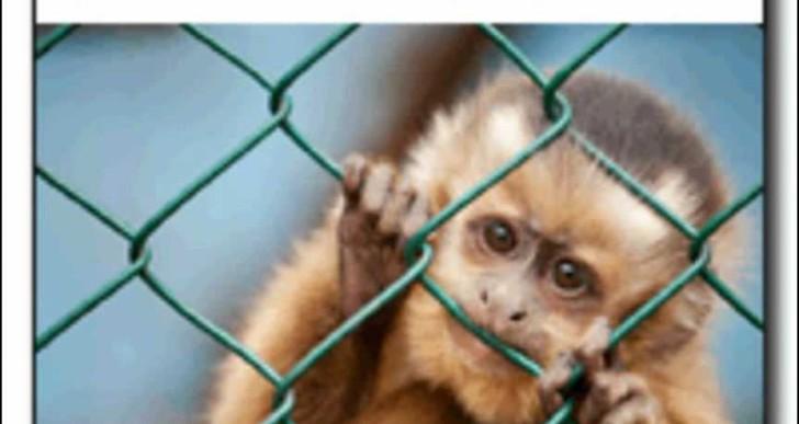Leáldozóban az állatkísérletek kora?