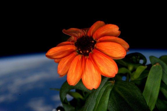 Kinyílt az első virág az űrben!