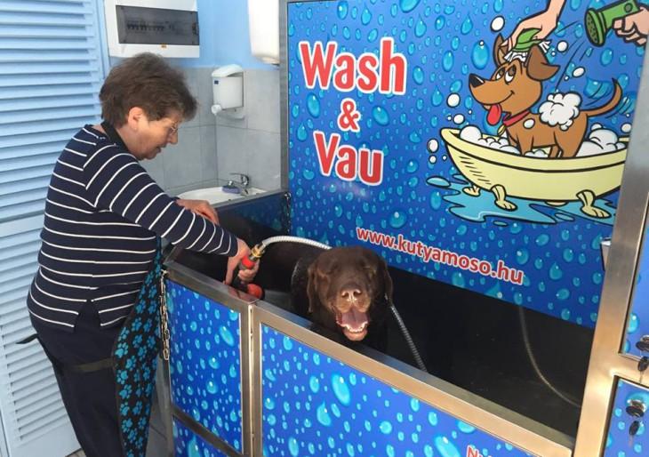 Önkiszolgáló kutyamosó nyílt Budapesten