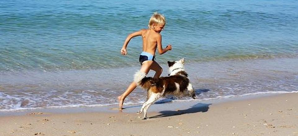 Cani-in-spiaggia-960x440
