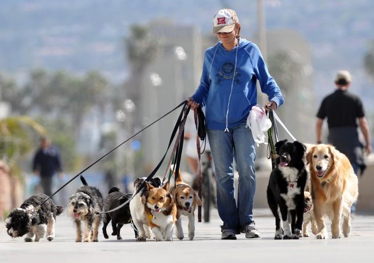 Gazdik figyelem! Már létezik online kutyaszitter közvetítő