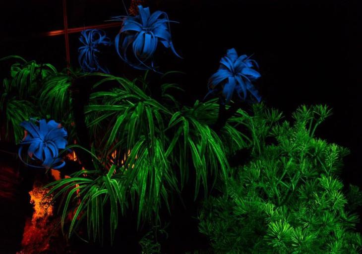 Meghódítja a világot a magyar világító növény