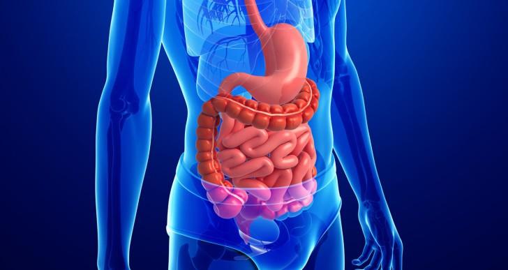 Új szervet találtak az emberi testben