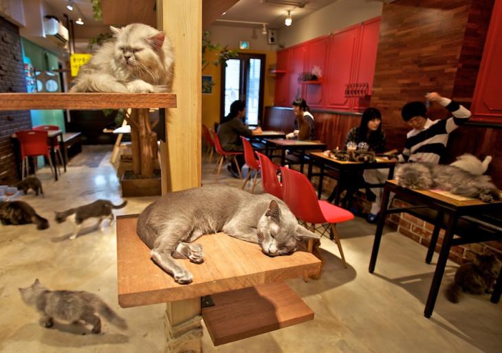 Állati jó helyek Budapesten