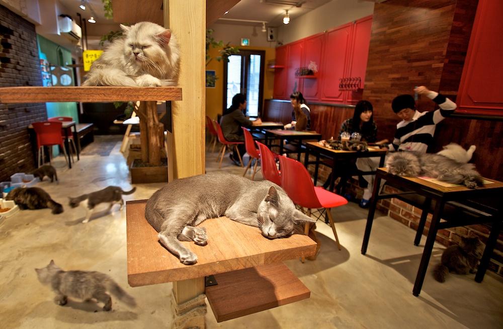 coolest pet cats