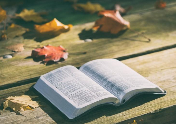 Találd meg az elvesztett könyveket
