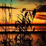 lake-balaton-580701_1280