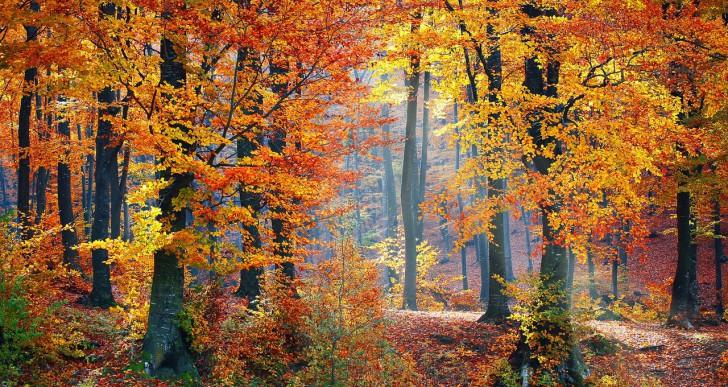 Legszebb őszi kirándulóhelyeink: ezeket az ékszerdobozokat látnod kel!