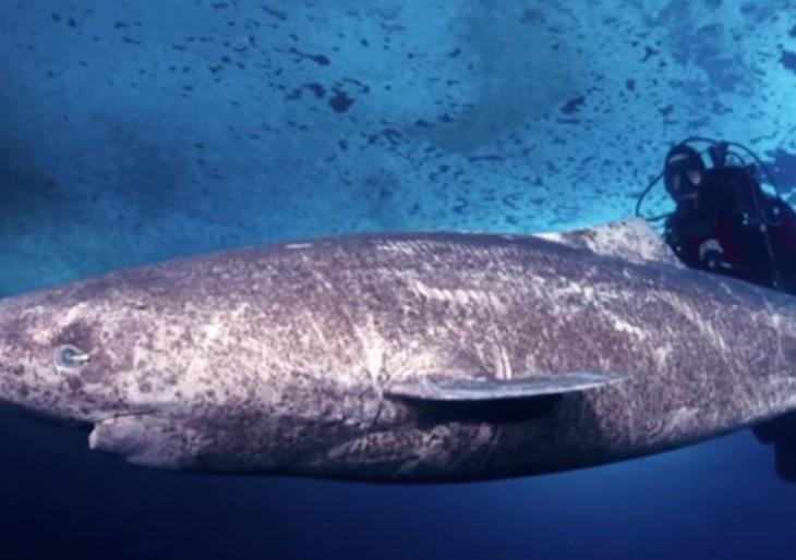 512 éves cápára bukkanhattak a kutatók!