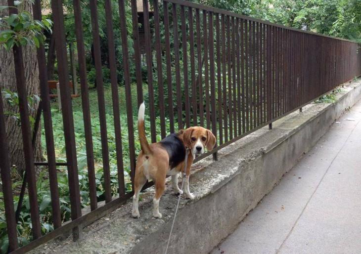 10 dolog, ami megváltozott az életemben, amióta kutyám van