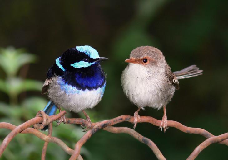 Elképesztő felfedezés: a madarak képesek megtanulni egymás nyelvét