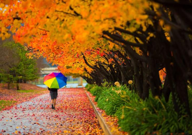 3+1 ingyenes őszi program