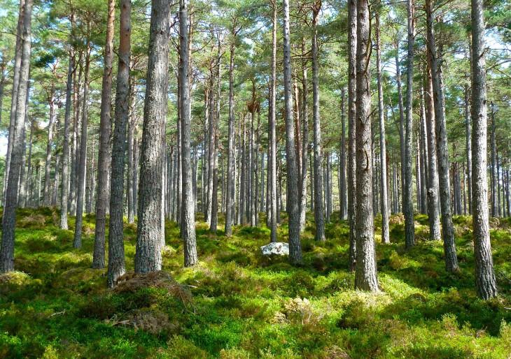 55 millió fát ültettek egy mobilappal