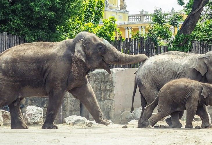 Európa legjobb állatkertjei közt van a budapesti