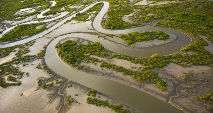 152 millió mangrovét ültettek Szenegálban