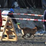 Zen-a-magyar-mentőkutya-lett-a-világ-legjobb-romkutatókutyája