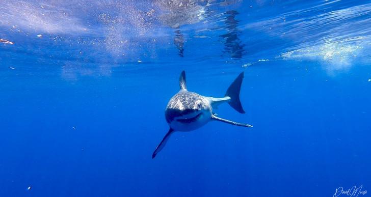 Magyar cápafotós nyerte a nemzetközi pályázatot