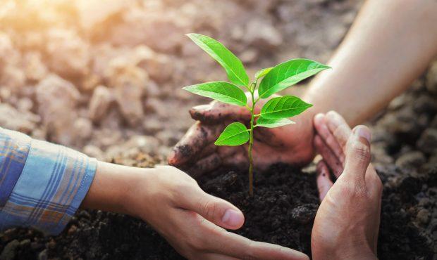 Pár év alatt 100 millió fát ültethetnek el hazánkban