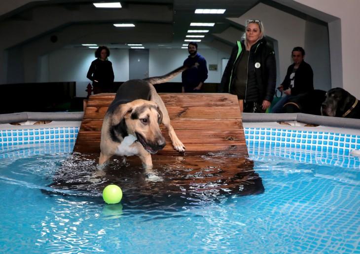 Wellness kutyáknak megnyitott a TopPancs