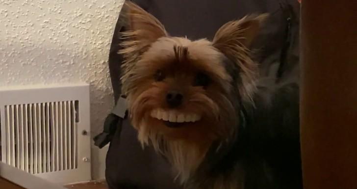 A kutya, aki ellopta a gazdája műfogsorát – videó