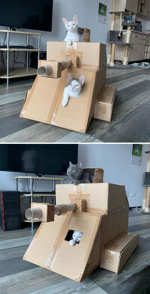 cat-tank-5eaa7361296ae__700