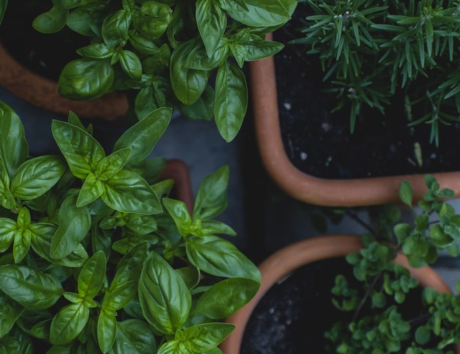Budapesti pincében terem az éttermi saláta