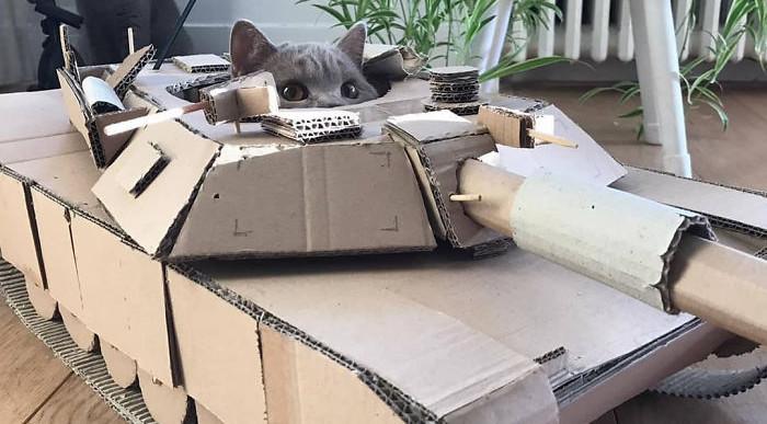 Van az a szintű unalom, amikor a macskádnak építesz tankot a karanténban
