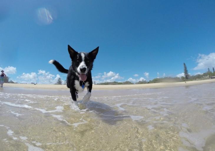 4 jó tanács, ha először mentek kutyás strandra